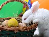 Victoria - Easter rabbit