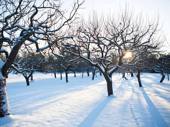 Zimowe drzewa - Zabawna łamigłówka do odbudowy pokrytego śniegiem drzewa (3×3)