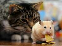 catandhamster
