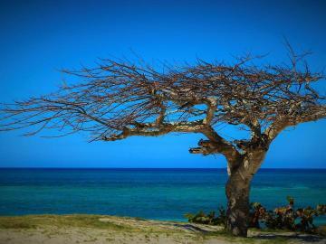 kustlandschap - zee, blauwe lucht, boom op de klif
