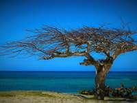 peisaj litoral - mare, cer albastru, copac de pe faleză