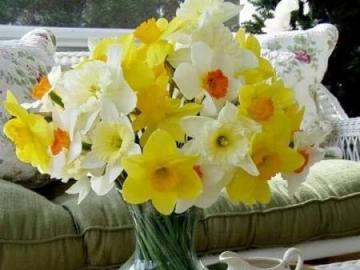 fiori - la natura stessa - daffodils in una pentola su un tavolo