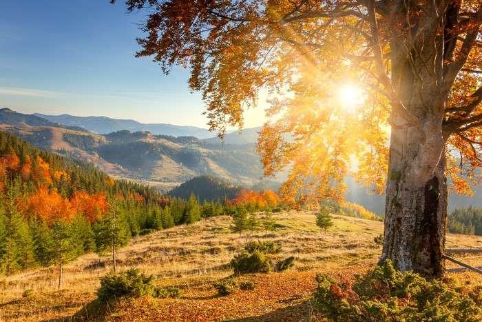 apus de soare - Dimineața de toamnă. Apus de soare printre copaci. Dimineața de toamnă la munte (2×2)