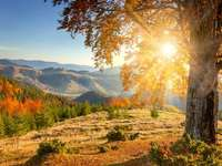 sunset - Autumn morning. Sunset among trees. Autumn morning in the mountains.