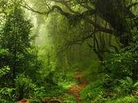 άγριο δάσος
