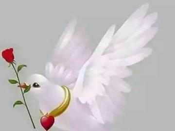animali adorabili - colomba bianca e rosolia