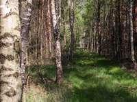 Weg in het bos