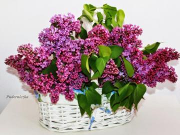 fiori - la natura stessa - cesto pieno di viola lilla