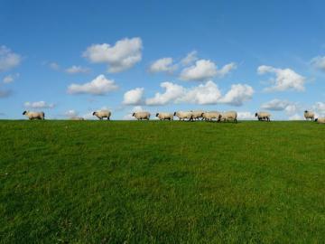Flock får