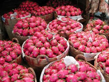 Kosze z dragon fruit (pitaja) - Tak można kupić dragon fruit w Nowej Zelandii