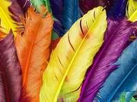 Kolorowa układanka