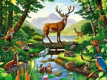 Nad rzeczką - zwierzęta, wodopój, las,rzeka