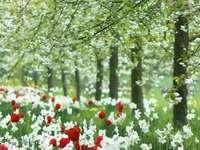 Ливада в цветя