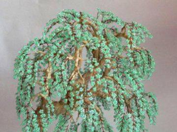 fiori - la natura stessa - albero verde della felicità