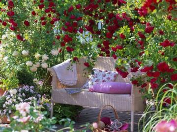 Różany ogród - tajemniczy - dlaczego? Ogród z powieści