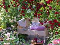 Růžová zahrada puzzle
