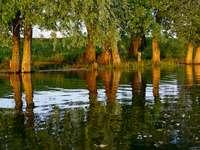 Odraz stromů v řece. online puzzle