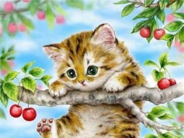 piccolo gatto gattino - piccolo gatto gattino