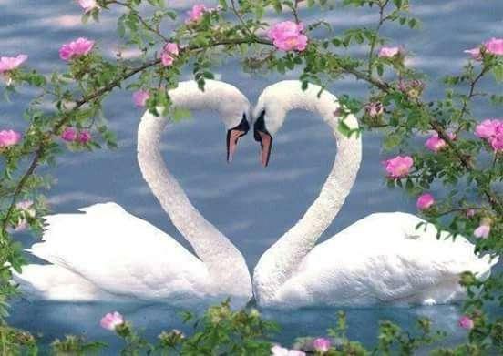 два малки бели лебеда