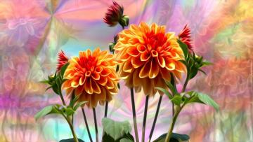 flowers c.d - Dahlias on a colored background