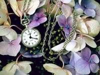 hortensia - bloemen, hortensia's, kijk