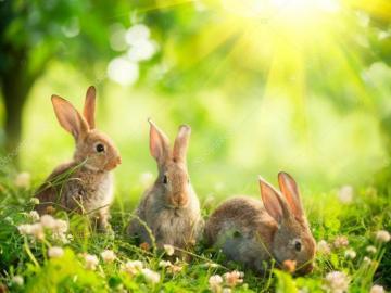 iepurași mici - iepuri care joacă