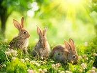 i piccoli coniglietti - i coniglietti che giocano