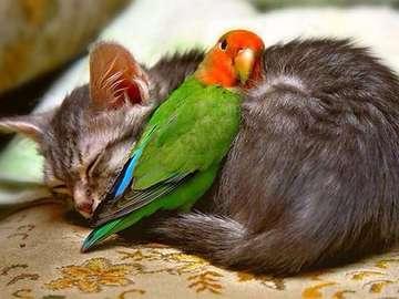 animali adorabili - gatto e gattino addormentato