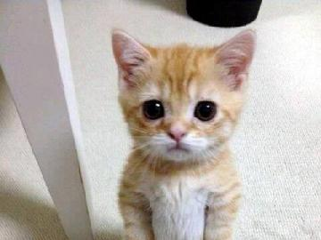 lovely animals - the kitten stands at attention