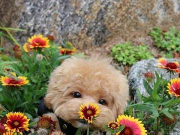 animali adorabili - Sembro uno dei fiori