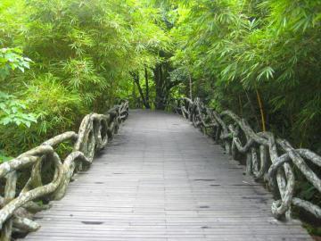 Pădure tropicală chineză. - Pădurea tropicală chineză
