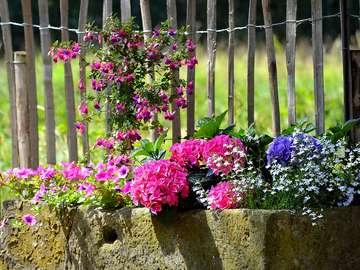Kolorowe kwiaty. - Kolorowe kwiaty w donicach.
