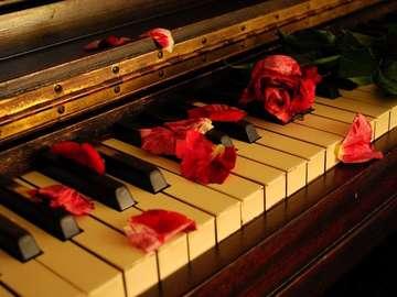 Petale de trandafir - Petale de trandafir la pian.