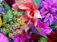 květiny - Květiny, jiřiny a další barevné