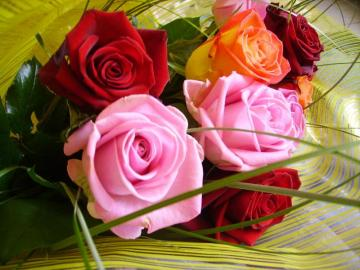 Pink, red roses, tea rose - Pink, red roses in a bouquet, tea rose