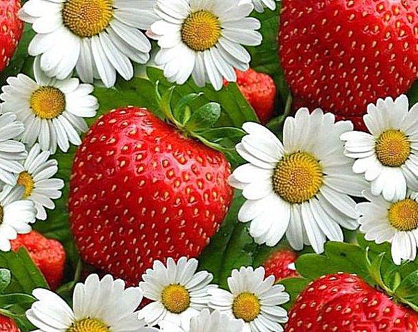 Fiori e fragole puzzle
