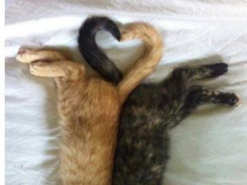 animali adorabili - abbracciato due gatti e un cuore