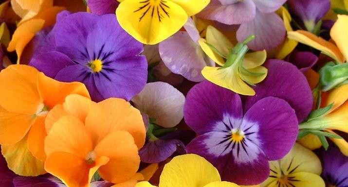 Opnieuw viooltjes - Weer kleurrijke viooltjes (10×10)