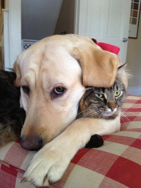 прекрасни животни - котка с куче - приятели (10×10)