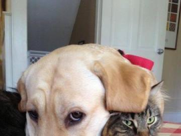 animali adorabili - gatto con cane - amici