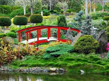 Japanese garden. - Japanese-style garden.