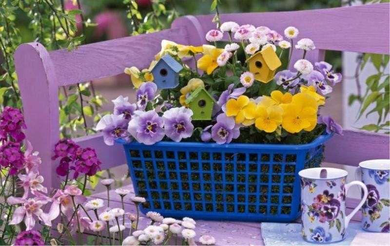 Pensées colorées - Pensées colorées dans un petit panier. La meilleure zone de puzzle avec des fleurs (10×10)