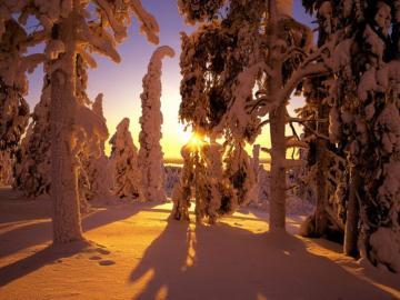 ЗИМНА ГОРА - зима, сняг, гора, слънчеви лъчи