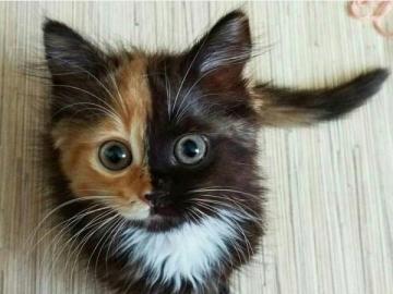 animali adorabili - piccolo gattino simmetrico