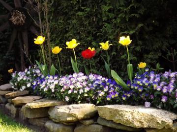 la natura stessa - rocaille - tulipani gialli