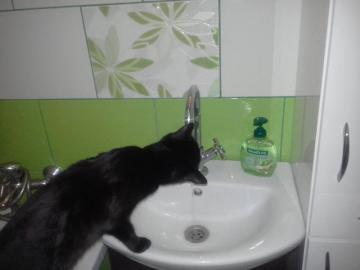gato negro bebe agua - Gato negro bebe agua del grifo en el baño.