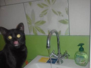 gato negro bebe agua - Gato negro bebe agua en el baño.
