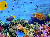 aquarium - colorful jigsaw puzzle