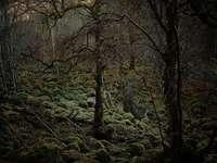 Forêt de l'âme