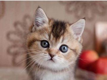 animali adorabili - Sono un gattino così piccolo